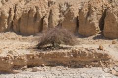01-Arugot-Wadi-Dead-Sea