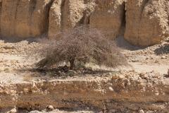 02-Arugot-Wadi-Dead-Sea