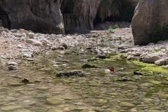05-Arugot-Wadi-Dead-Sea