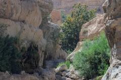 07-Arugot-Wadi-Dead-Sea