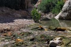 08-Arugot-Wadi-Dead-Sea