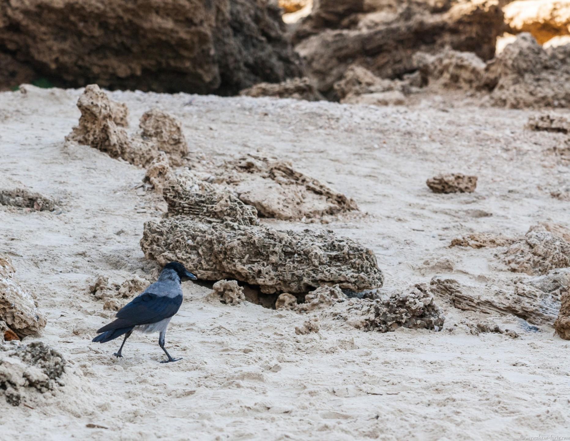 1000D_Birds0052