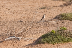 1000D_Birds0026-2