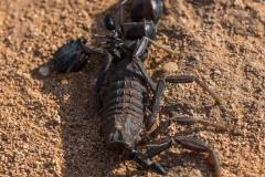 6D_Black-Ant0024-2