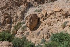 06-Eyn-Gedi-Dead-Sea