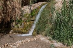 07-Eyn-Gedi-Dead-Sea