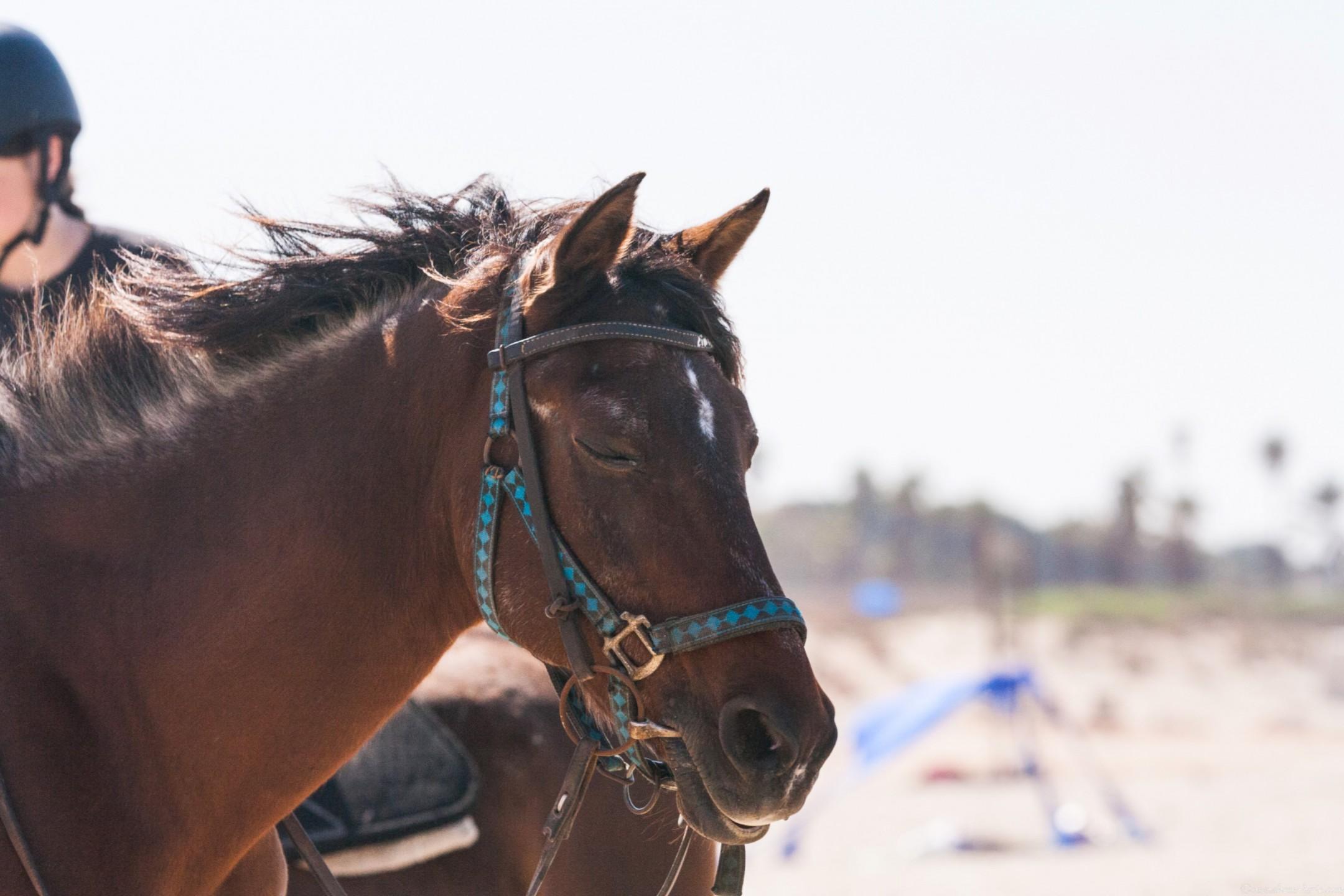 1000D_Horse0080