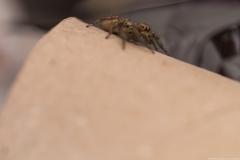 04-Menahem-Lurie-Eran-The-Spider