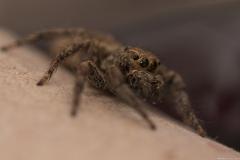 05-Menahem-Lurie-Eran-The-Spider