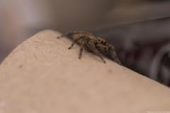 06-Menahem-Lurie-Eran-The-Spider