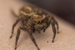 08-Menahem-Lurie-Eran-The-Spider