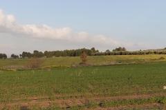 02-Gezer-Fields