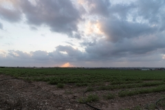 07-Gezer-Fields