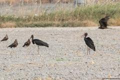 02-Kfar-Rupin-Bird-Watching