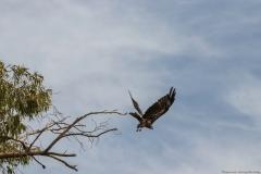 05-Kfar-Rupin-Bird-Watching