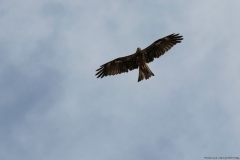06-Kfar-Rupin-Bird-Watching