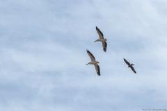 07-Kfar-Rupin-Bird-Watching
