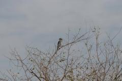 09-Kfar-Rupin-Bird-Watching
