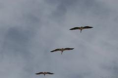 10-Kfar-Rupin-Bird-Watching