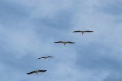 11-Kfar-Rupin-Bird-Watching