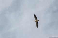13-Kfar-Rupin-Bird-Watching