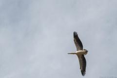 14-Kfar-Rupin-Bird-Watching