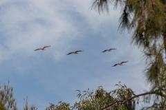 15-Kfar-Rupin-Bird-Watching