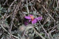 09-בורות-לוץ-פרחים