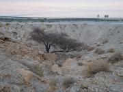 10-Salvdora-River