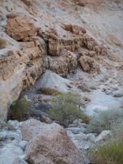 12-Salvdora-River