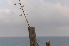 04-Menahem-Lurie-Sidna-Ali-20062020