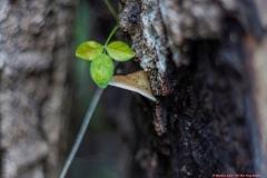 02-Tel-Dan-Fungi-Kingdom