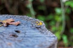 04-Tel-Dan-Fungi-Kingdom