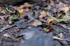 07-Tel-Dan-Fungi-Kingdom
