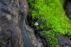 09-Tel-Dan-Fungi-Kingdom