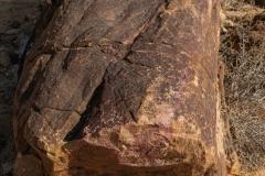 01-Tree-Fossil