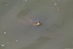 01-Turtle-Bridge-Aug-21-2020